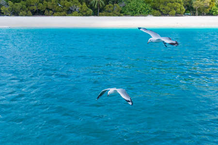 whitehaven beach: Tropical beah with seaguls over turquoise blue water and silca white sand on the background. Whitsundays, Queensland, Australia