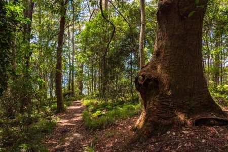 Wanderweg in tropischen Regenwald am sonnigen Tag. Queensland, Australien Standard-Bild