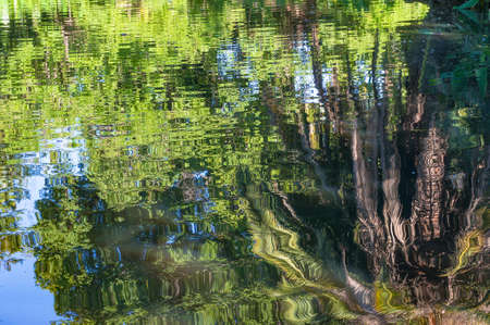 Abstract nature background of tropical vegetation reflected in water. Park pond with palm tree and vivid green leaves reflected in water