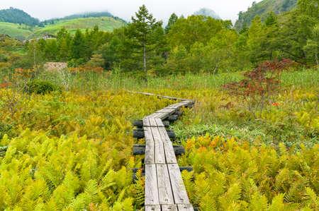 Mooi Japans plattelandslandschap met houten weg, manier. Natuurbescherming in Japan. Kusatsu, Gunma prefectuur
