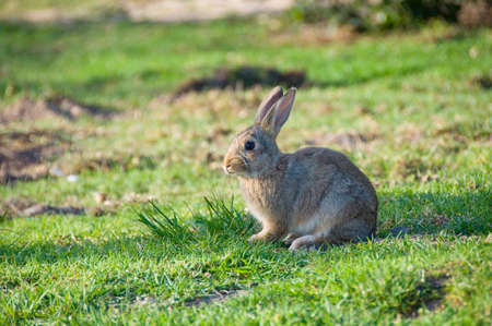 lapin: Cute young bunny sitting on green grass on sunny day Banque d'images