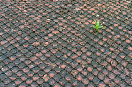 Old and dirty roof tiles pattern with green plant accent Stock Photo