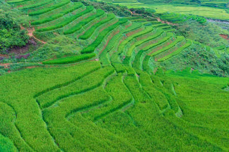 Aerial view on green rice terraces. Nature background Stock Photo