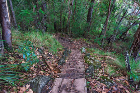 Hiking path with staircase in the forest. Nature exploration background