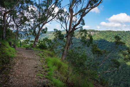 Hiking path in the forest with eucalyptus trees and rain forest views. Nature background