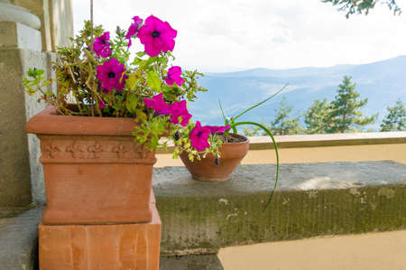 Bright flowering plant in a terracotta pot on verandah with mountain landscape on the background