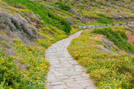 Cobble, stone foot path with green grass and yellow flowers Imagens