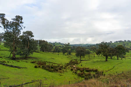 Countryside landscape of green grass and trees paddock, farmland