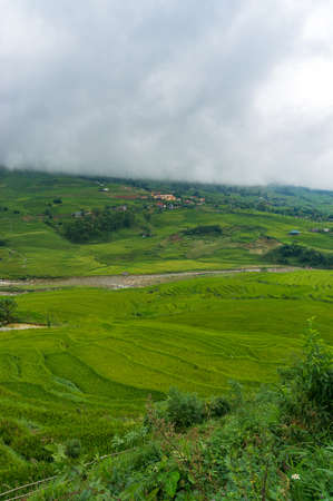 Green rice terraces of rural Vietnam. Nature background