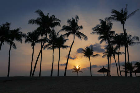 Tropical beach sunset landscape with palm trees silhouettes against colorful tropical sunset sky