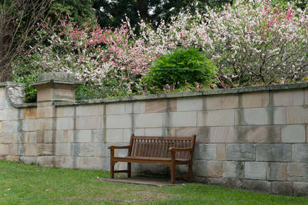 Wooden bench in a garden with blooming sakuras on the background. Springtime nature scene