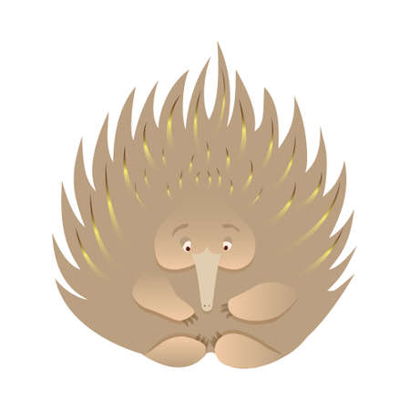 Spiky echidna cartoon caracter isolated on white background. Cute native Australian animals hand drawn vector illustration