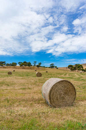 Agriculture landscape of a field with round straw bales on sunny day