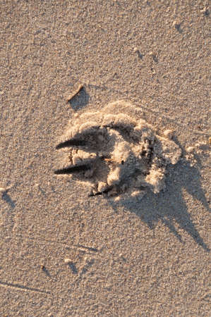 Dogs paw with claws footprint in sand. Animal paw print on the beach
