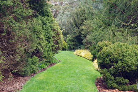 Fresh green grass foot path in the garden, park with lush plants. Natural landscape design background