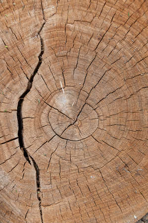 Close up of saw cut of tree trunk, stump. Nature wooden texture, background Foto de archivo