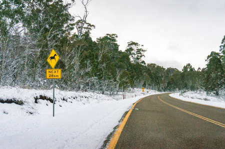 Winter forest landscape with asphalt road with yellow dividing lines. Travel Australia in winter