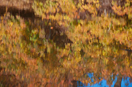 Colorful orange autumn leaves reflected in water. Abstract nature background