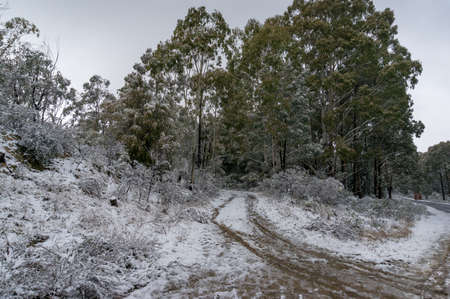 Snow covered dirt road in the forest. Rural transport infrastructure landscape. Snowy Mountains, Australia
