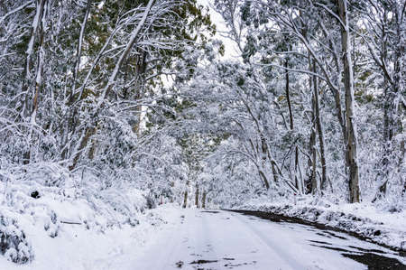 Winter forest landscape with ice and snow covered asphalt road. Travel in winter scene