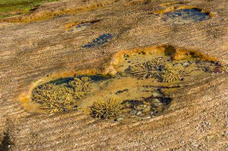 Marine underwater life background, Seaweed plants under transparent ocean water surface. Ocean seaweed in the rock pools with clear salt water nature background
