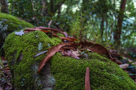 Green wet moss covering old tree trunk with old dry bark pieces and leaves. Forest ecosystem, biodiversity  Reklamní fotografie