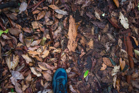 Hiking in the forest, exploring nature concept with men stepping on forest floor covered with dry leaves. Human nature interaction