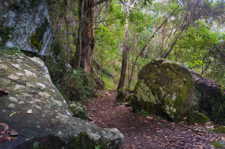 Green forest landscape with old rocks and hiking path. Summer rainforest scene