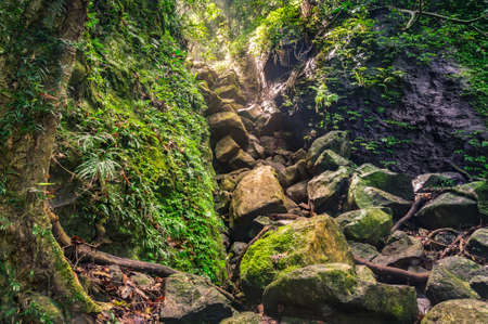 Forest landscape with rocky gorge with green moss and tropical vegetation. Wet rainforest nature background