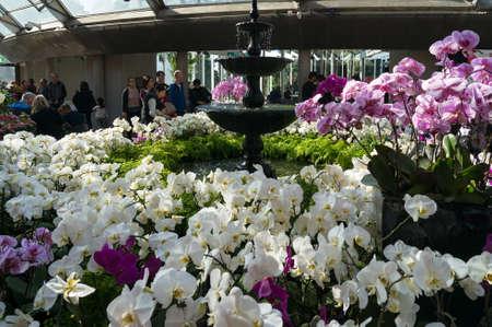 Sydney, AUstralia - July 23, 2017: Tropical flower display in the Calyx in Sydney Royal Botanic Garden