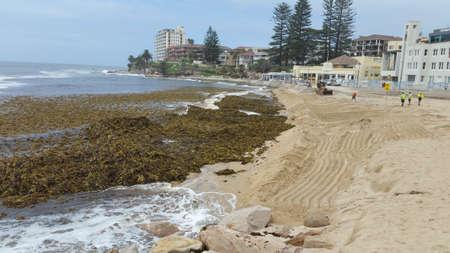 Sydney, Australia - February 13, 2020: Heap of seaweed on Cronulla beach after storm cyclon 報道画像