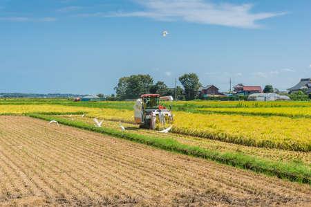 Ibaraki, Japan - September 10, 2016: Farmer in combine harvester harvesting crop from the field. Ibaraki prefecture, Japan