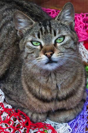 Green eyes cat portrait