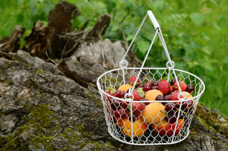 Picnic with mixed summer fruits and berries - apricots, peaches, strawberry and sweet cherry on mossy tree in forest photo