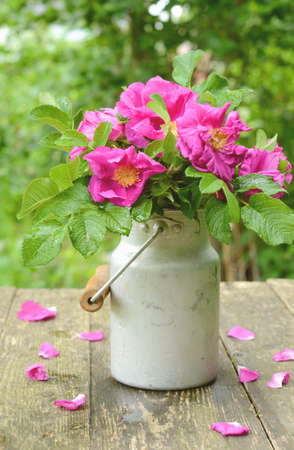 Dog rose bunch in old aluminum milk can on rusted garden table Stock Photo