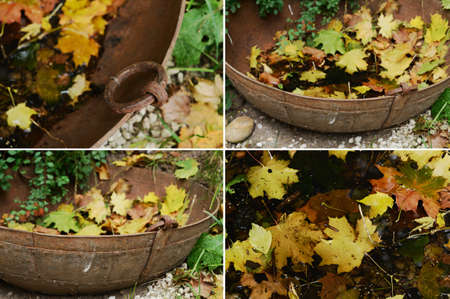 Set of four photos of outdoor decor - vintage metal bowl and fallen maple leaves photo