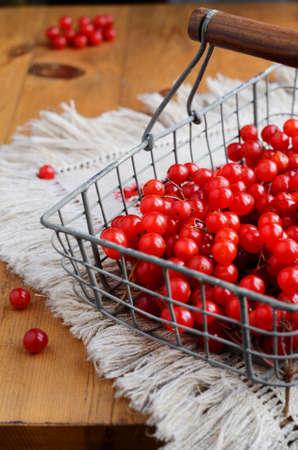 guelder rose berry: Red berries of viburnum in wire basket
