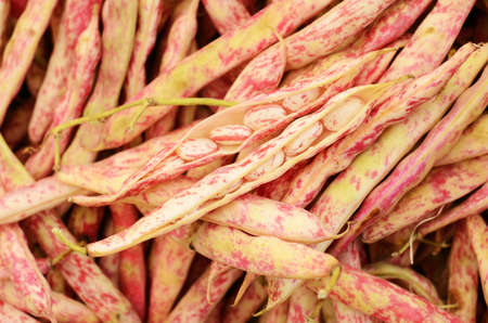 borlotti beans: Young red beans at vegetable market Stock Photo