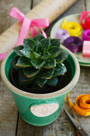 Flower shop - stone rose cactus in green pot, colorful ribbons and decor, wrapping paper and scissors on wooden table photo
