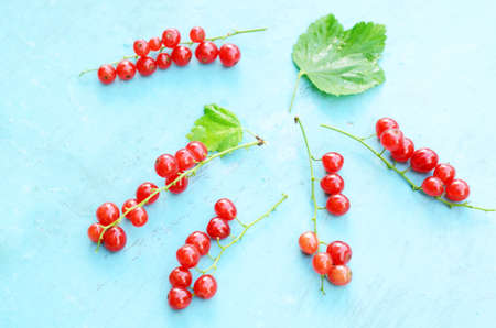 red currant: Red currant on light blue background