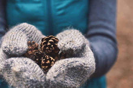 the hands: Woman holding pine tree cones in woolen mittens, close up