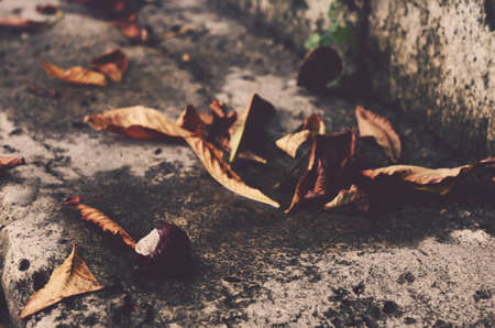 marron: Chestnut and leaves, autumn time, dark tones