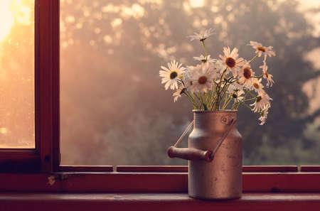 windowsill: Bunch of daisy in old churn on wooden windowsill in sun lights Stock Photo