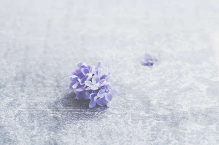 lilac flowers: Single lilac flower with empty space over grey concrete background