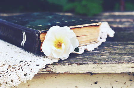 wild rose: Old book and wild rose flower on vintage lace doily on summer garden table