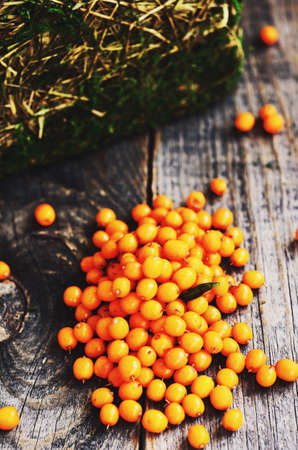 seabuckthorn: Fresh sea-buckthorn on wooden table Stock Photo