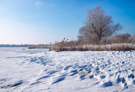 frozen river: Winter landscape with reeds, trees, and frozen river Stock Photo