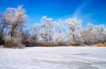 frozen river: Winter landscape with trees and frozen river