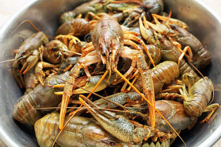 cancers: Live crawfishes in a metal bowl before cooking