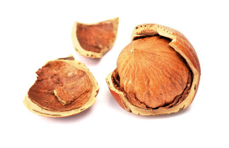 filbert nut: Hazelnut or filbert nut isolated on white background. Close-up